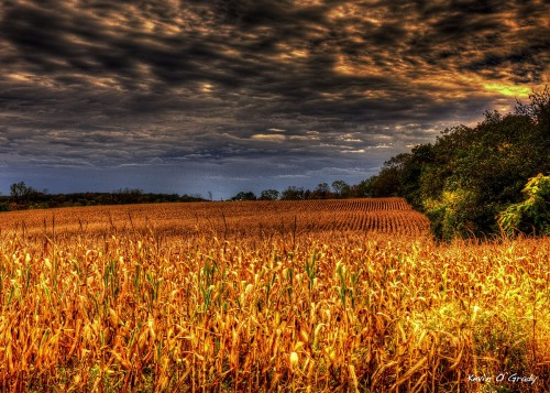 Fall-Feast-Field